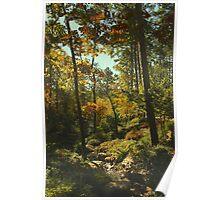 Sunlight in the Garden Poster