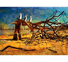 Parched Earth Photographic Print