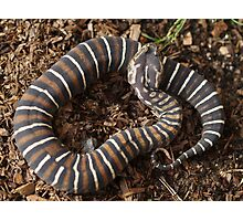 Scaleless Photographic Print