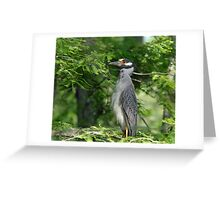 Yellow Crowned Night Heron Mother Greeting Card