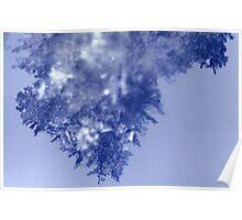Snow Flake Closeup Poster