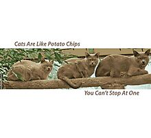 Cats Are Like Potato Chips Photographic Print