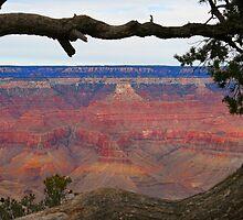 Grand Canyon  by Judson Joyce