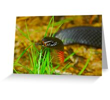 Red-bellied Black Snake [Pseudechis porphyriacus] Greeting Card