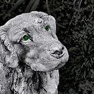 Just a green eyed dog by Kurt  Tutschek