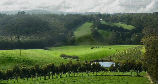 Adelaide Hill's in Green. by Mick Smith