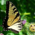 Yellow Swallowtail by LynnMarie