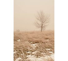 Lonely Tree in Winter Photographic Print