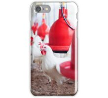 Hens in an organic, free roaming, chicken coop  iPhone Case/Skin