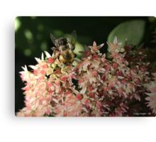 Autum Joy Bumble Bee Canvas Print