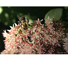 Autum Joy Bumble Bee Photographic Print