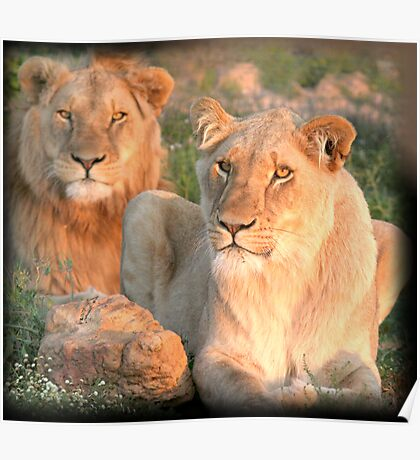 Pair of the proud pride Poster