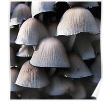 Woodland Mushrooms Poster