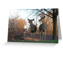 Nosey Greeting Card