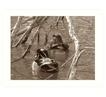 Sepia Wood Ducks Art Print