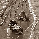 Sepia Wood Ducks by angelandspot