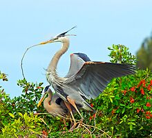 Great Blue Herons Nest Building by Michael Wolf