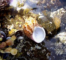 Shell on the Rocks by snuffi