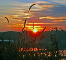CATTAIL SUNRISE by Spiritinme