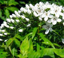 Flower Life Cycle by crystaliana