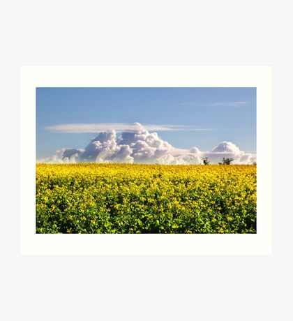 Canola Crops and Clouds Art Print