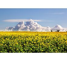 Canola Crops and Clouds Photographic Print