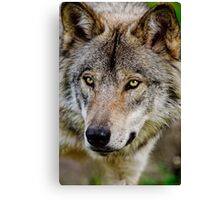 Timberwolf Portrait  Canvas Print