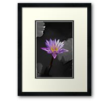 Indian Lily  Framed Print