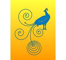 Peacock Photographic Print