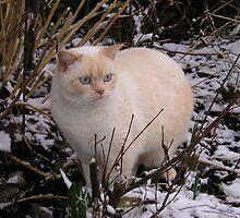 Nala The Snow Cat by amao1202