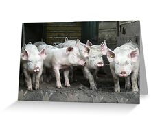 Dirty Pigs Greeting Card