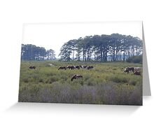 Assateague Herd Greeting Card