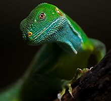 Iguana by Steven Holmes