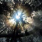 Forest Sunrays II by Ern Mainka