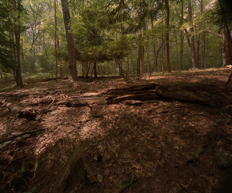 Woodland, Sullivan County, New York by HelenB
