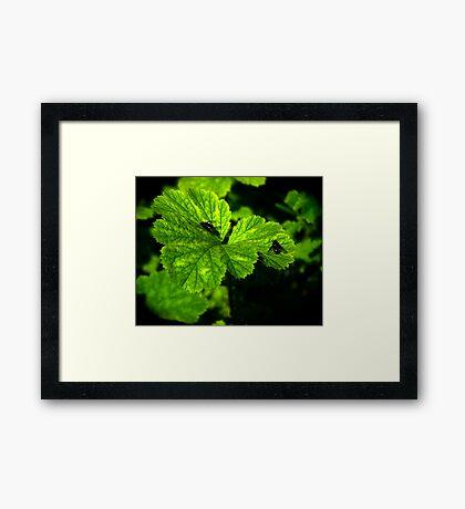 Micro Environment Framed Print