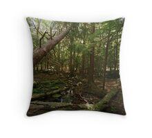 Stream, Sullivan County, New York Throw Pillow