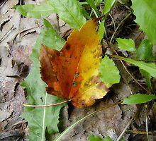 Autumn Never Ends by pattimus