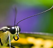 Butterfly Macro by Jason Anderson