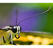 Butterfly Macro Photographic Print