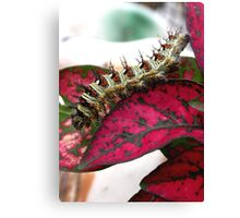 Yikes! Spikes! Canvas Print