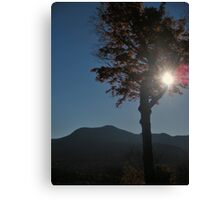 Sun shining beyond tree Canvas Print