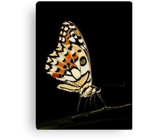Lime Butterfly Canvas Print