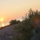 Romantic summer sunset by Marko Palm
