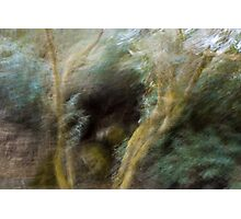 Free Forest Photographic Print