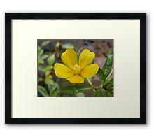 Yellow! Framed Print