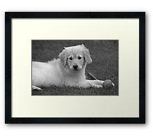 Bumble, our new puppy Framed Print