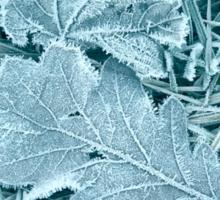 Frosty Leaves 3 Sticker