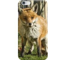 Sleepy fox in suburbia iPhone Case/Skin