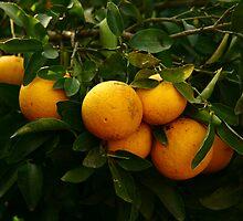Grapefruit by Ori Kaydar